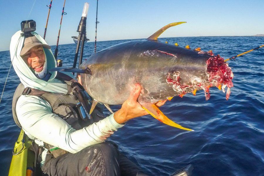 Kayak Fishing What About The Sharks Railblaza